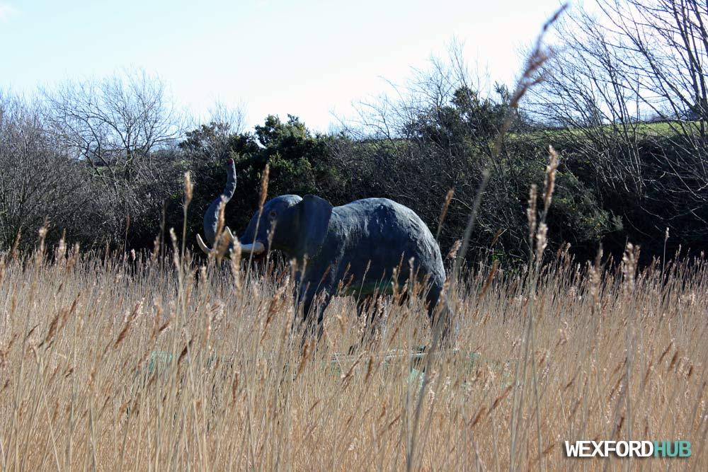 Elephant Ferrycarrig