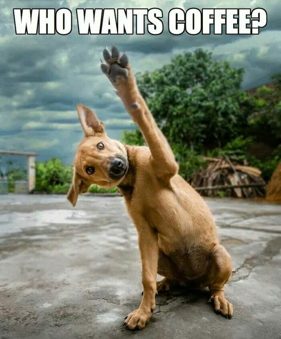 Funny Who Wants Coffee Dog Picture