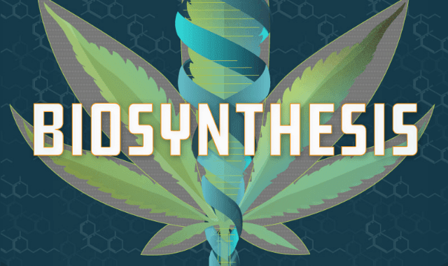 Biosynthesis: The Science That May Unlock the Medical Potential of Cannabis