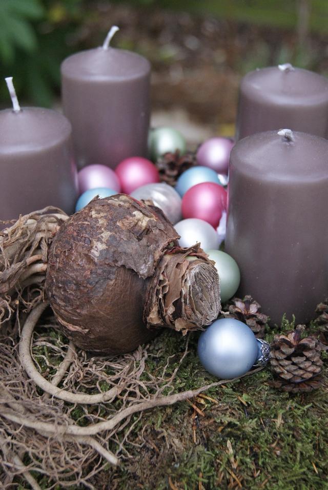 DIY Adventskranz aus Moos mit Amaryllis