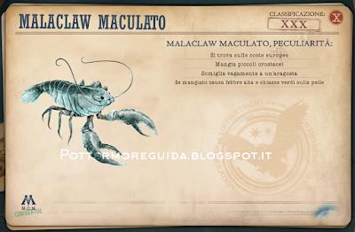 Malaclaw Maculato