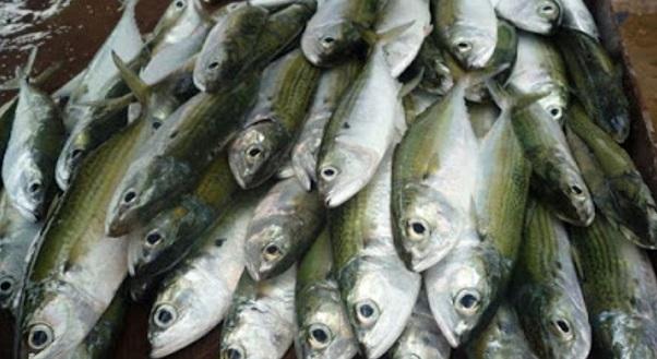 Menteri Kantoi!! Bukan Cuaca Sebabkan Harga Ikan Mahal Tapi Nelayan Naikkan Harga...