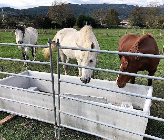 foto de un bebedero en hormigón para caballos
