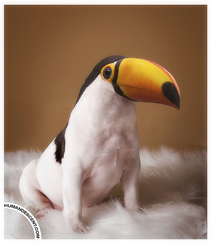 Toucan play that way