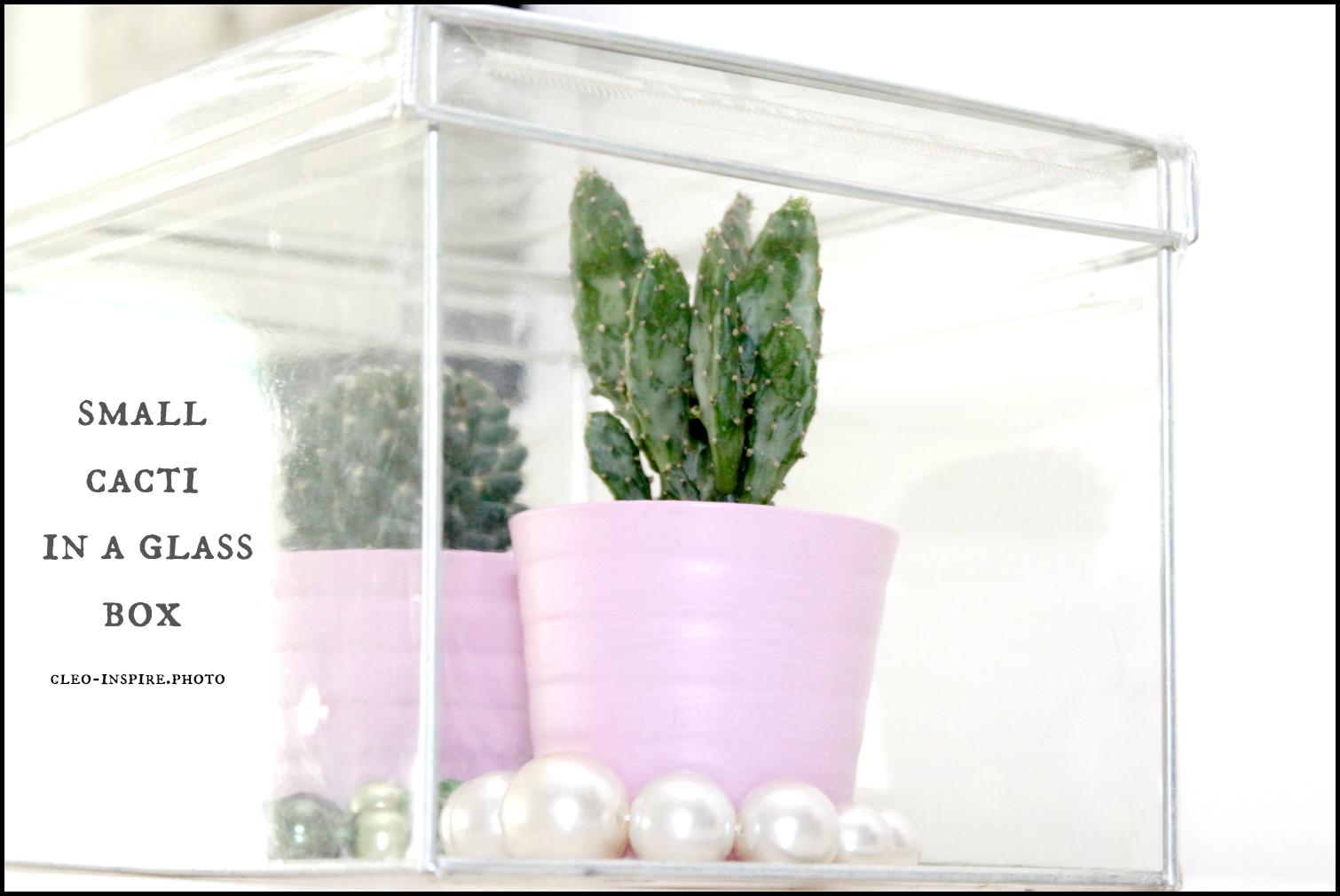 dekoracji z kaktusami