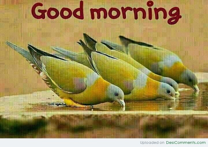 Birds Wishes Wishes Good Morning Wallpaper With Message