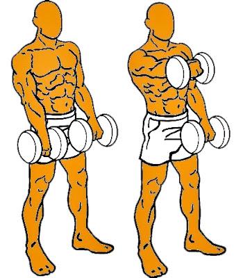 Hombro mancuerna frontal alternado ejercicio hombre