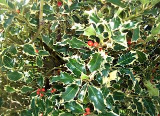 Il mondo in un giardino bacche per tutti i gusti e tutte for Piante sempreverdi da esterno resistenti al freddo