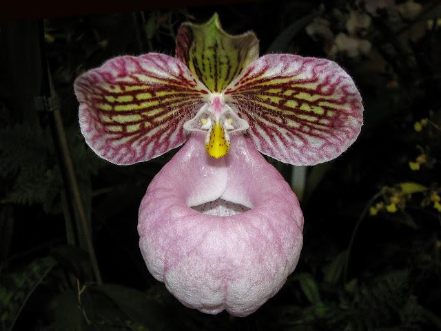 http://tipspetani.blogspot.com/2016/11/bunga-bunga-indah-yang-ternyata-beracun_2.html