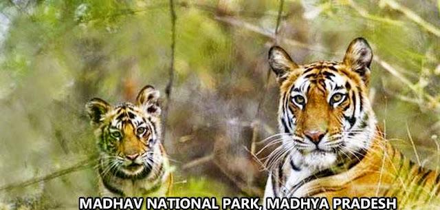 information madhav tiger reserve
