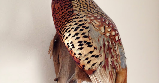 Pheasants and Fords