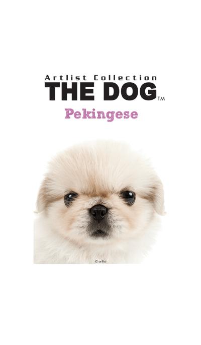 THE DOG Pekingese