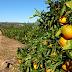 Agricultura Sustentável vai estar em debate em Alte