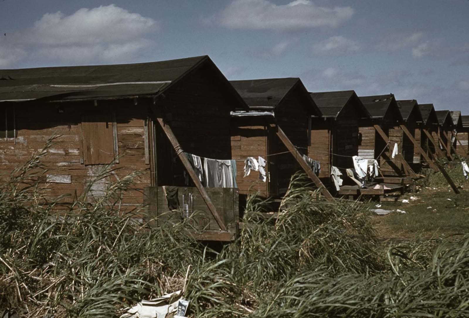 Condemned housing for migrant sharecroppers in Belle Glade, Florida.