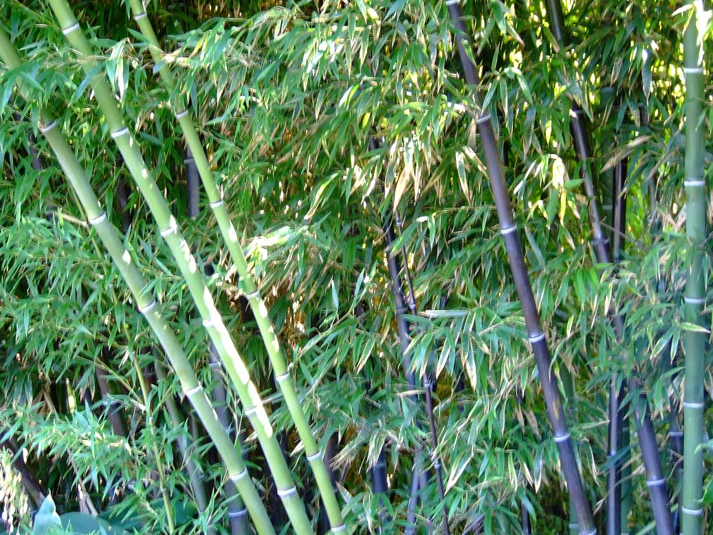 Bamboo Tree Hd Wallpapers Hd Pictures Wallpapers