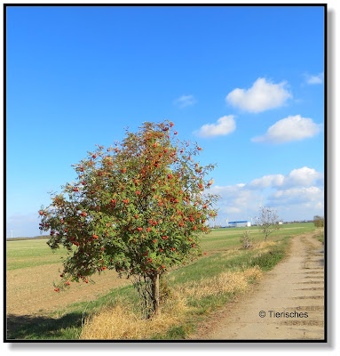 so schön kann Herbst sein