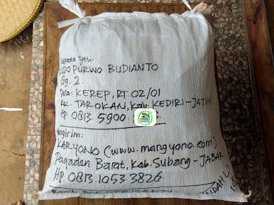 Benih pesanan RIDO PB. Kediri, Jatim.   (Sesudah Packing)