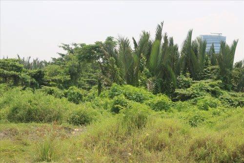 Địa điểm dự kiến xây nhà hát là khu đất dừa nước hoang vắng với cỏ mọc um tùm