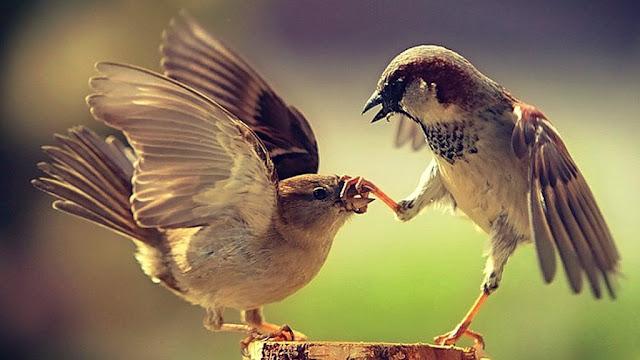 http://buenasiembra.com.ar/salud/autoayuda/los-koans-del-zen-180.html