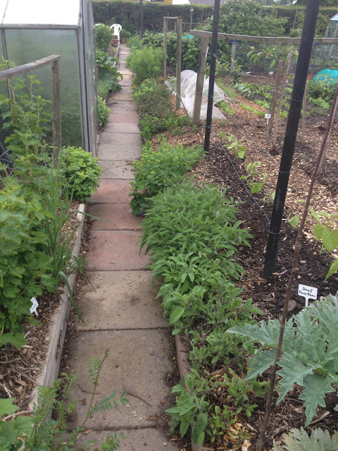 The possibilities of using slope to benefit the allotment.