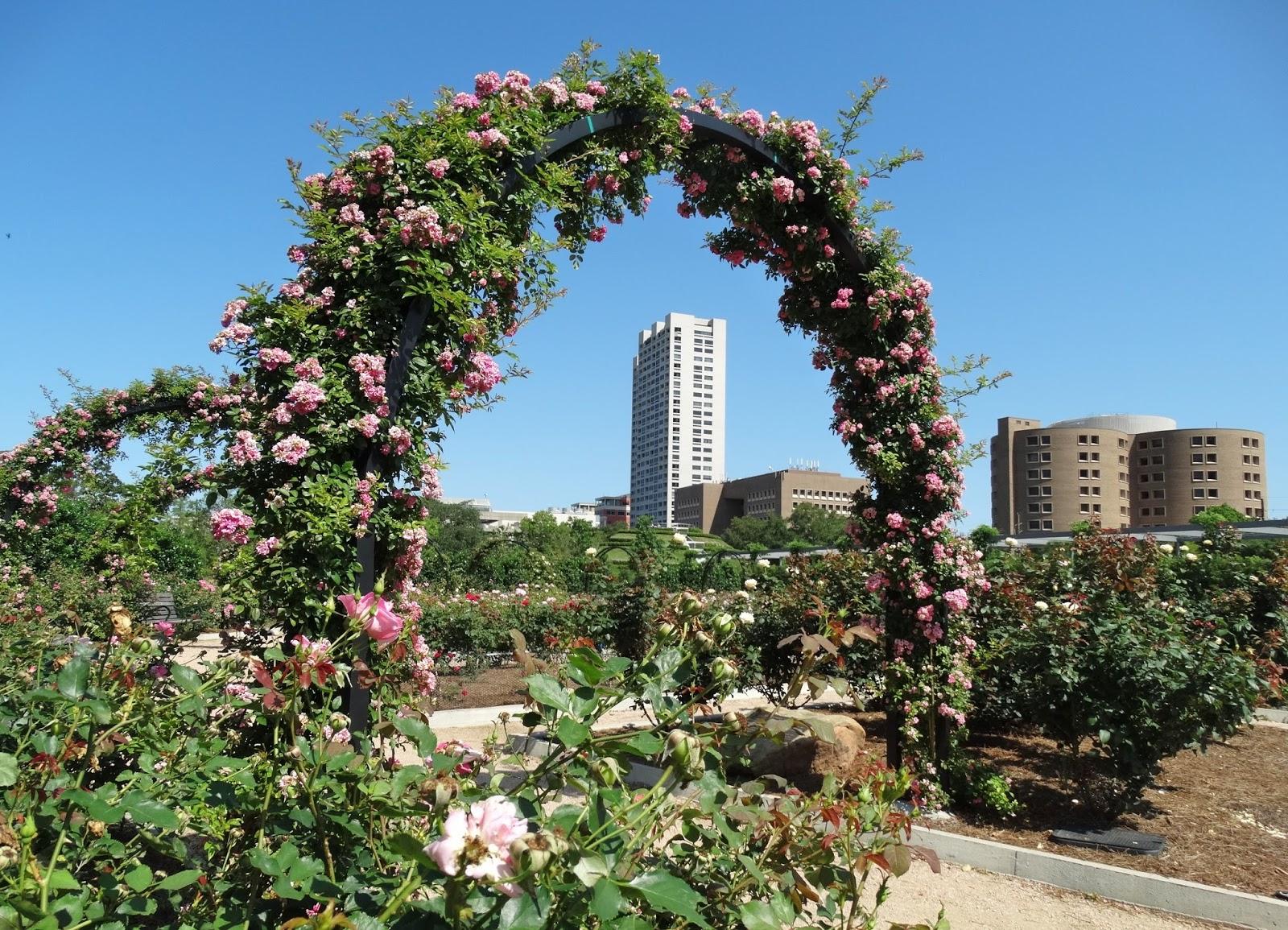 chinese garden houston texas / 5280 hotel deals