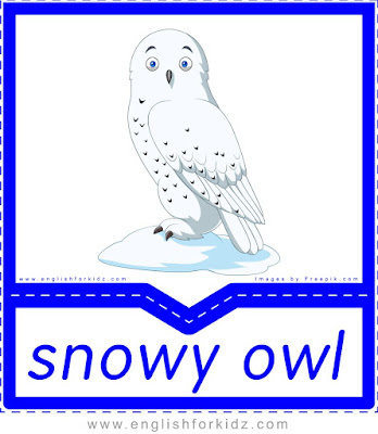 Snowy owl - printable Arctic animals flashcards for English learners