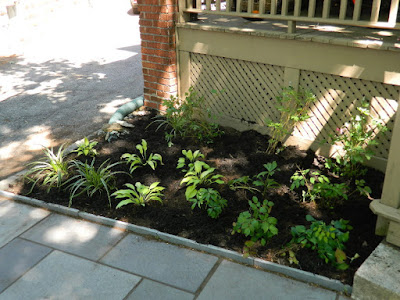 Davisville Mount Pleasant East New Front Shade Garden After by Paul Jung Gardening Services--a Toronto Gardening Company