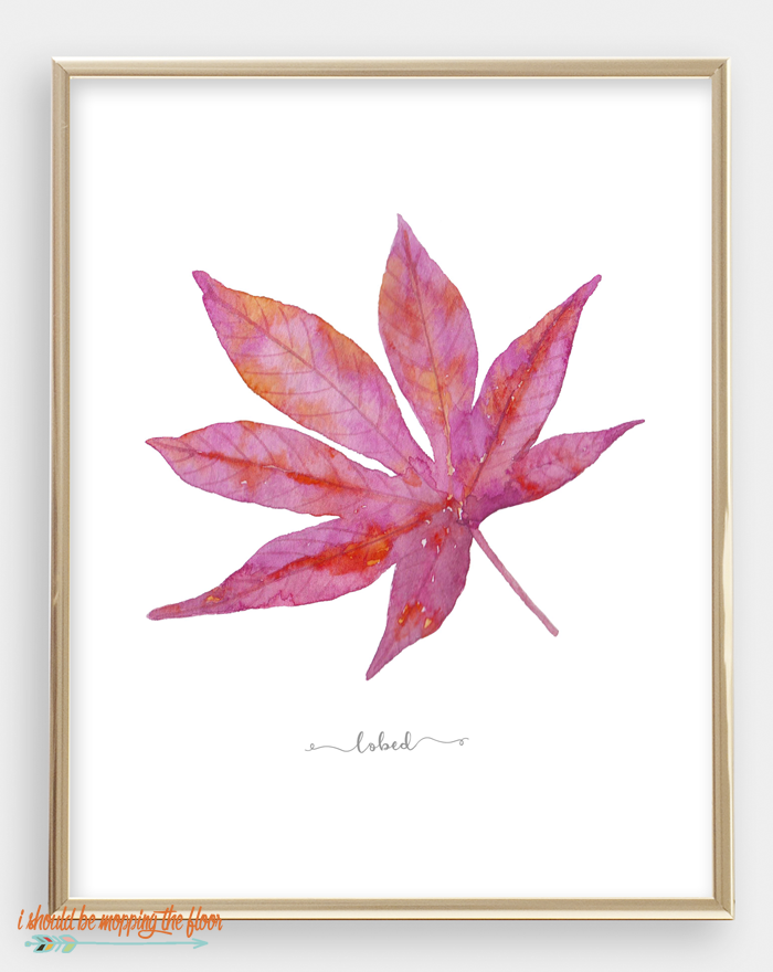 30 Watercolor Fall Leaf Printables | These 30 GORGEOUS and VIBRANT leaf printables are the perfect compliment to any fall decor. Download, frame, and display... (they are STUNNING displayed with all 30 together)!