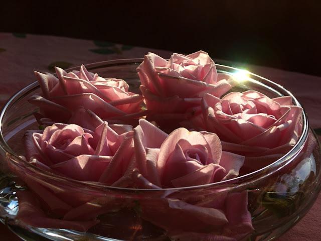 Plukkede roser