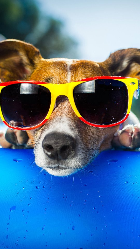 Dog Wearing Sunglasses Pic 540x960 Wallpaper