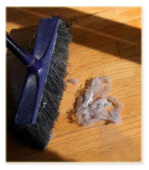 Dust Mite Information Health Tips
