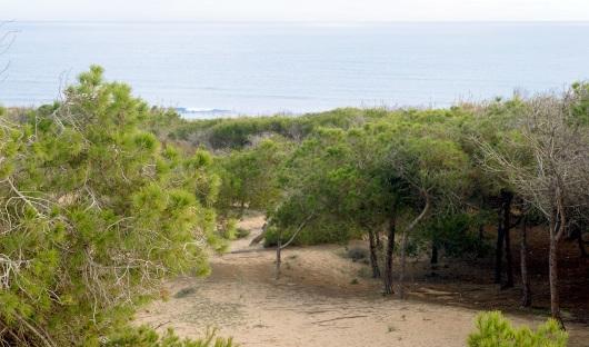El Consell recuerda la prohibición de lanzar material pirotécnico en terrenos forestales o a menos de 500 metros de ellos