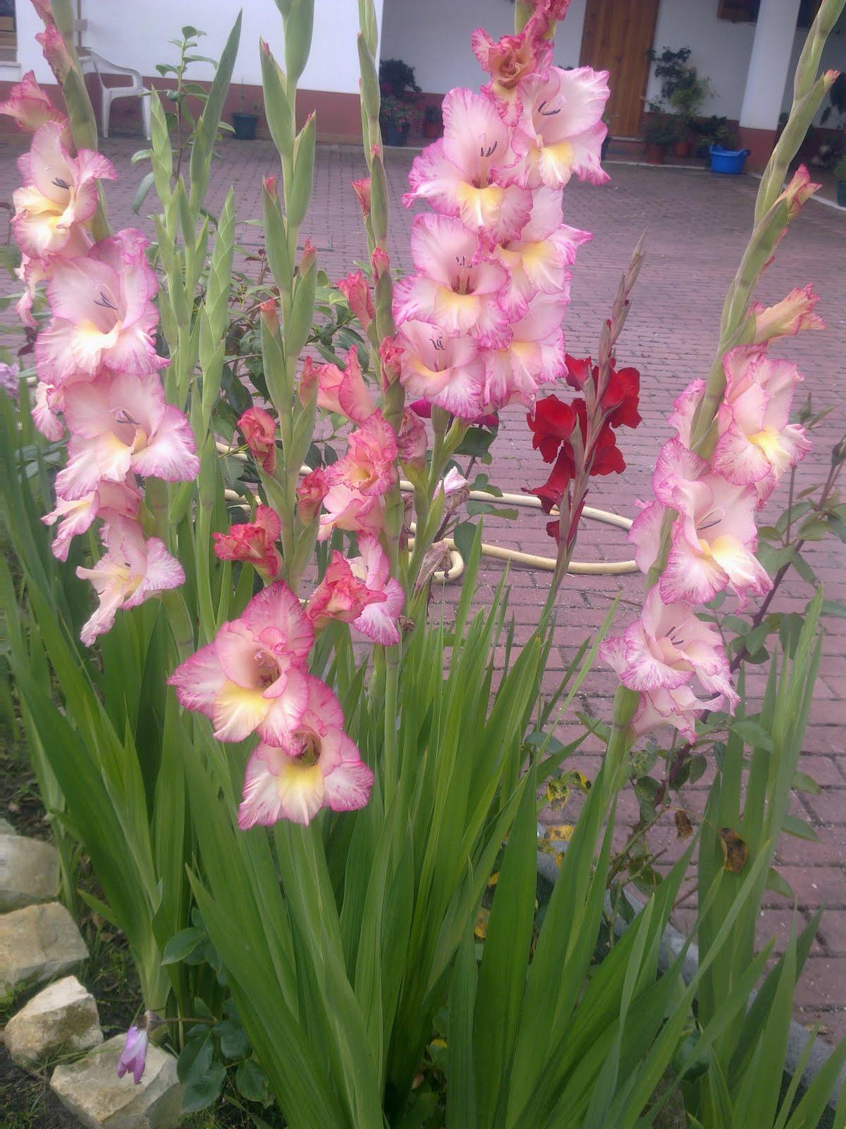 """Adélia """"flor de jasmim"""" : Mais um pouco de nós"""