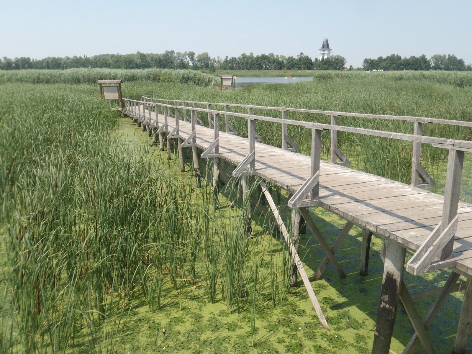 6559cb1b8a Kirándulóutak Magyarországon : A Tisza-tavi Vízi Sétány