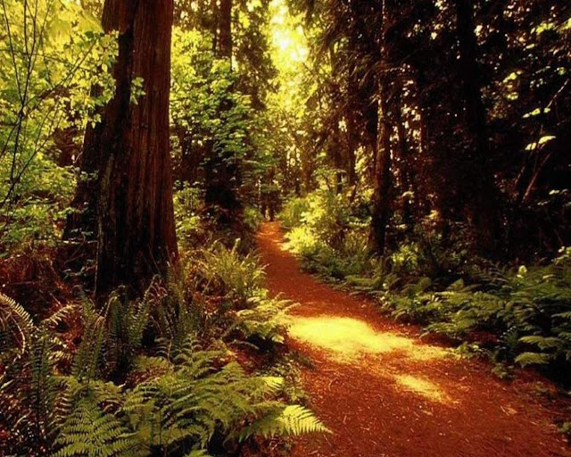 deep forest wallpapers world amazing wallpapers hot