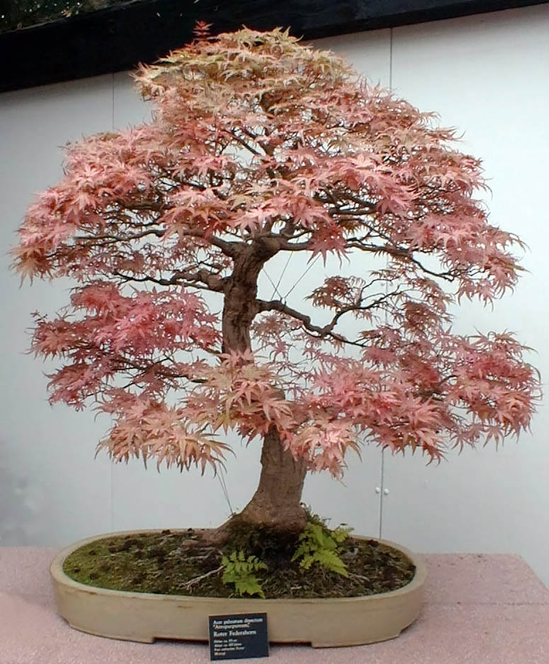 Bonsai Is A Living And Ever Changing Form Of Art In The Case Painting Or Sculpture Once Piece Gets Completed Painter Puts Aside Brush