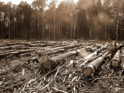 Trying To Combat Illegal Logging In Latin America ...