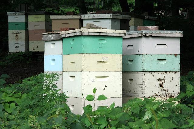 Μέθοδος Μπαμπίλη: Για να πολλαπλασιαστούν τα μέλια μας