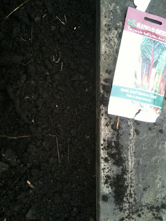 gardening, how to sow seed