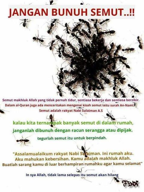 Rasulullah Marah Bila Kita Membakar Semut, Begini Cara Mengusirnya Agar Diridhoi Allah