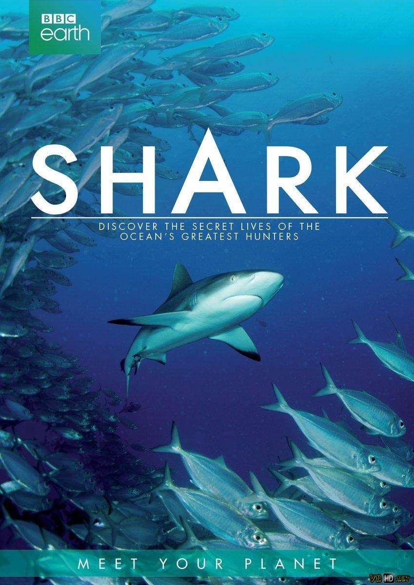Thế Giới Bí Ẩn Của Cá Mập