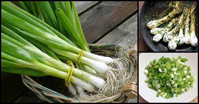 From Aiding In Respiratory Function To Reducing Our Risk Of Cancer, Spring Onions Provide Many Health Benefits