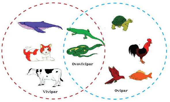perkembangbiakan generatif hewan