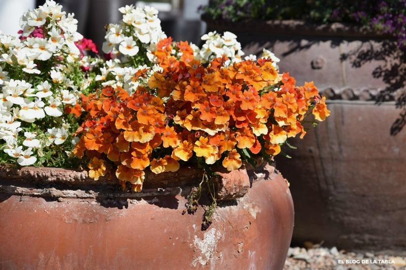 Celebrando la primavera en macetas de barro for Jardines de primavera