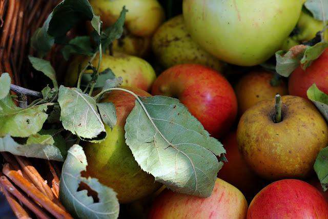 Ocet jabłkowy wyjątkowy