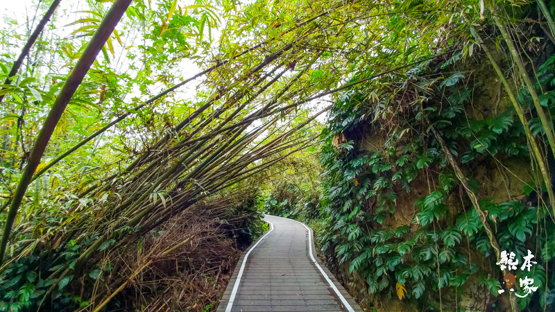 小琉球山豬溝生態步道-彷如阿凡達中身處潘朵拉星上的納美人禁地🍎隱藏🍎