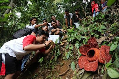 Habitat Bunga Rafflesia Arnoldi di Bengkulu