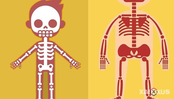 Fakta 9 - Sumsum tulang belakang janin 20 minggu semakin terbentuk
