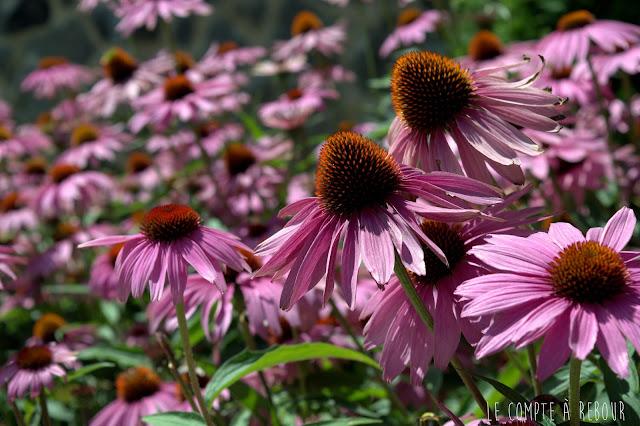 Fleurs au Parc Mont Royal