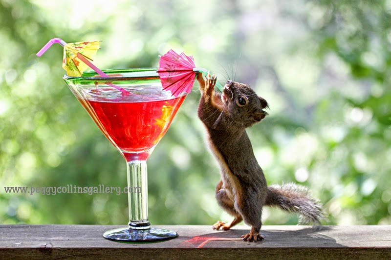 happy new year, squirrels, happy hour